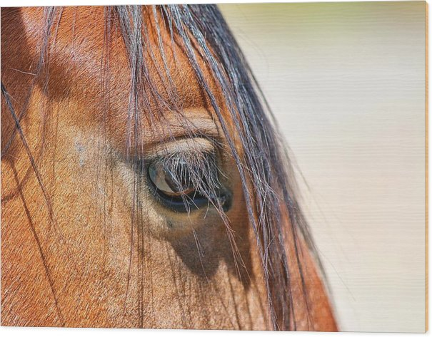 Equine Macro Photography Wood Print featuring the photograph The Eye Of The Soul by Maria Jansson