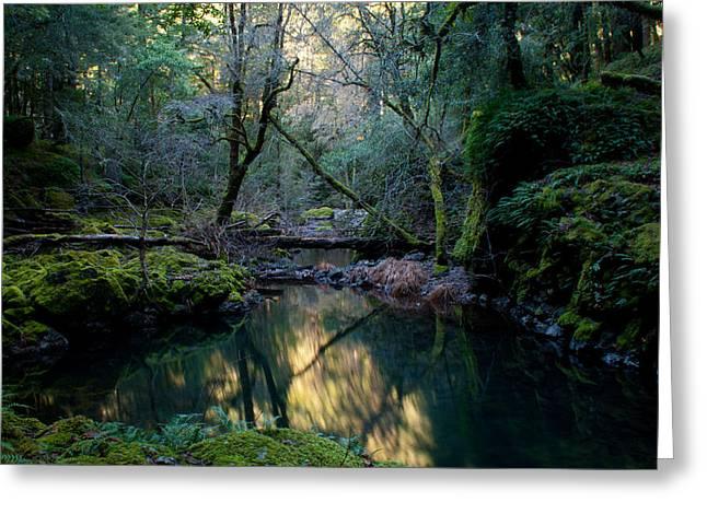 Alpine Dam Area Fairfax Ca. Photograph By