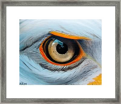 Eagle Eye Framed Print By Alex Rios