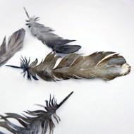 mini fallen feathers 1