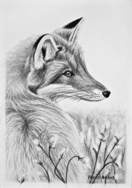 """Red Fox, 2013 - 5""""x7"""""""