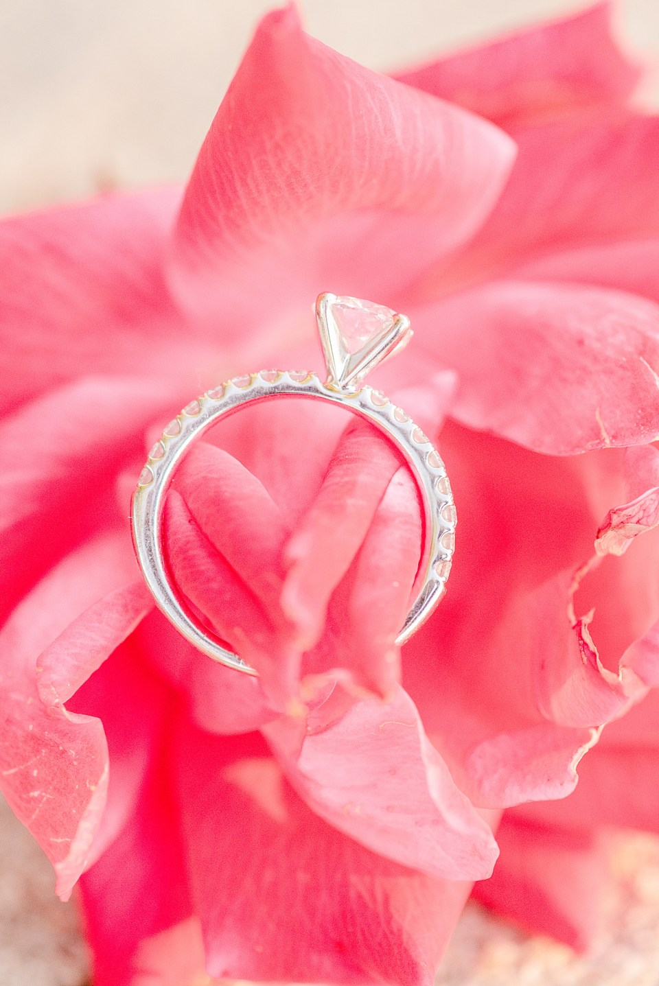 engagement ring rests on pink flowers