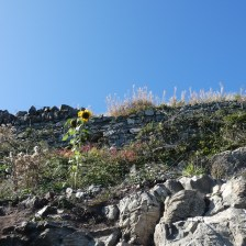 Cliffwalk Greystone to Bray