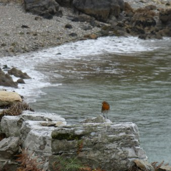 On every hike a robin is following me!