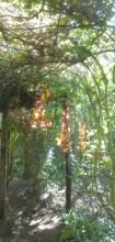 Flowering vine covered walkway to the hammocks