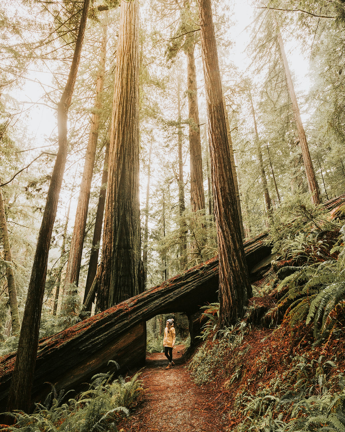 How-to-make-money-while-traveling-the-world-Redwoods