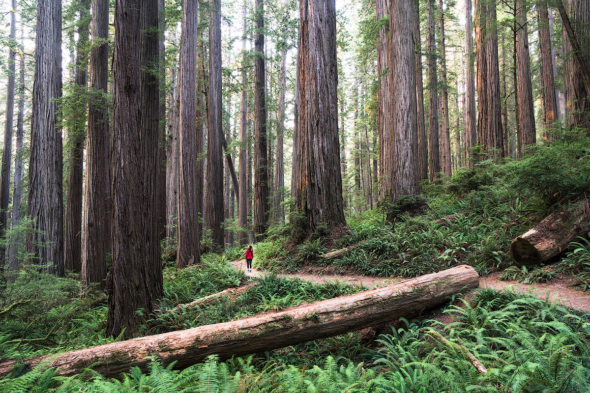 AMERICA'S NATIONAL PARKS – ALL 59 RANKED BEST TO WORST - REDWOOD NATIONAL PARK