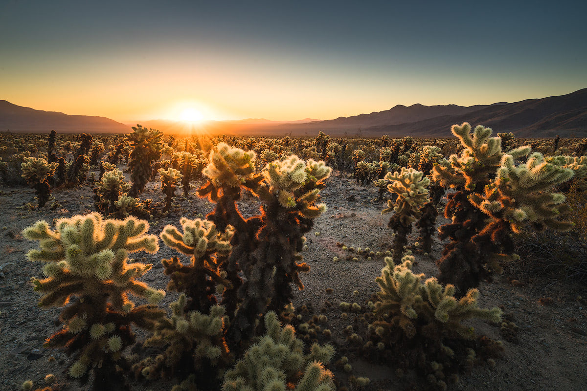 AMERICA'S NATIONAL PARKS – ALL 59 RANKED BEST TO WORST - JOSHUA TREE NATIONAL PARK