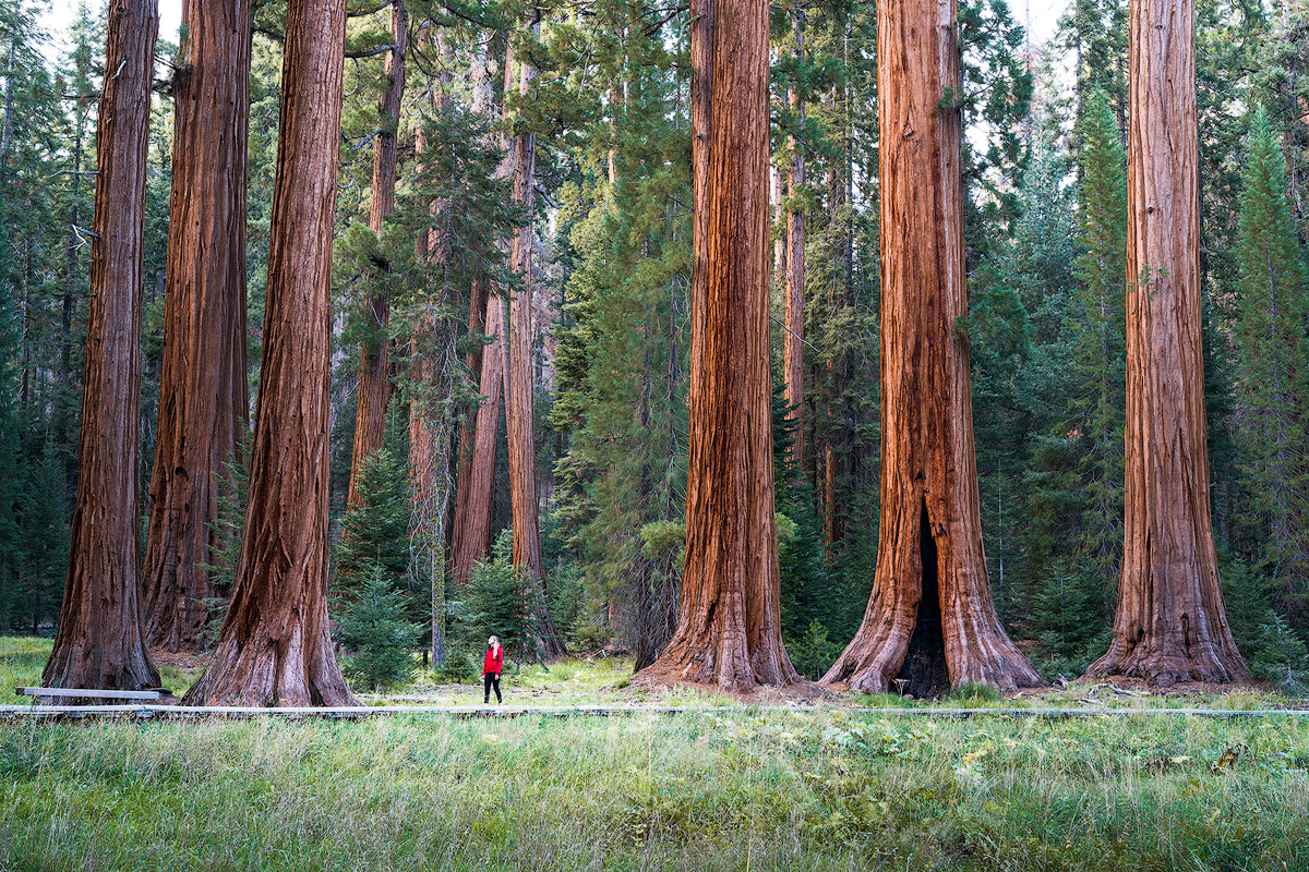 AMERICA'S NATIONAL PARKS – ALL 59 RANKED BEST TO WORST - SEQUOIA NATIONAL PARK