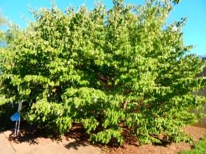 Wish Tree for Washington, DC by Yoko Ono