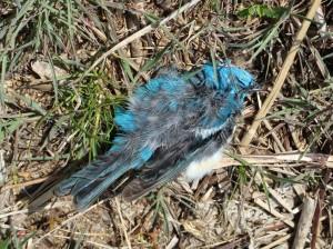 sad for the dead bluebird mass kill off last week