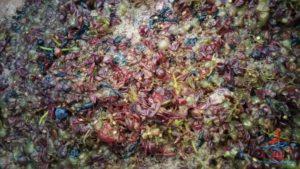 michigan-grapes-for-wine-renespoints-blog-puremichigan-joy-11