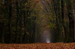 Donker herfstbos