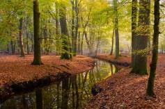 Herfstbeek