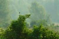 Almeerse jungle