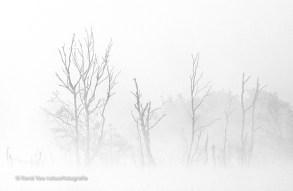 Silhouetten in de mist