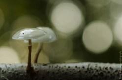 Ochtendsfeer paddenstoel