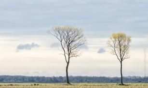 Tweeling bomen