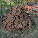 Cow Dung a source of biogas
