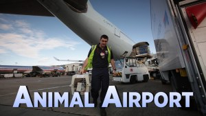 Animal Airport Channel