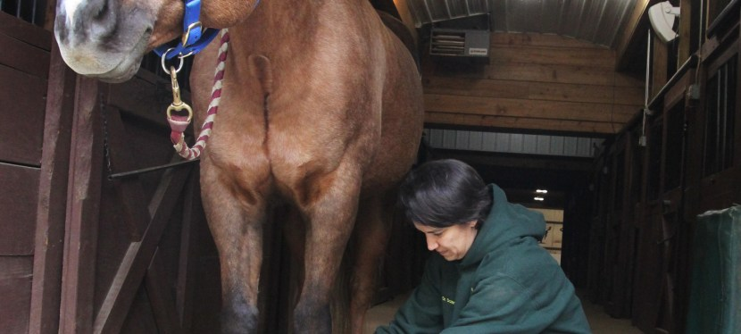 Equine Magnetic Therapy