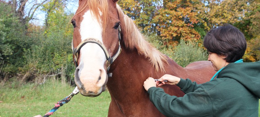 Equine General & Emergency Medicine