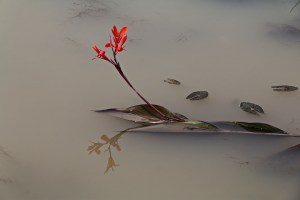 Flower, water, grief