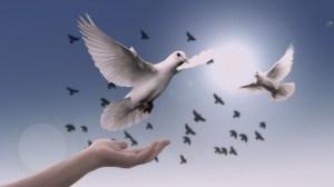 birds, flying, sky, hand, protector