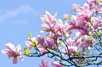 spring headaches acupuncture