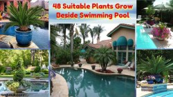 48 Suitable Plants Grow Beside Swimming Pool