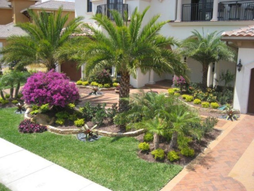 Palm Trees In The Front Yard 02