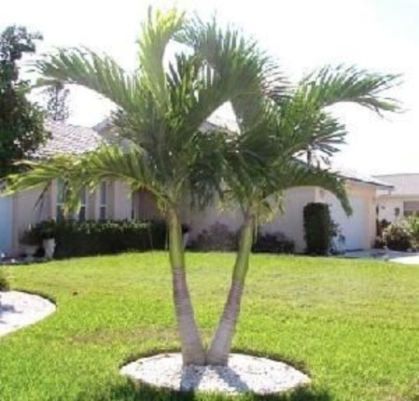 Palm Trees In The Front Yard 17