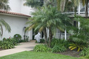 Palm Trees In The Front Yard 27