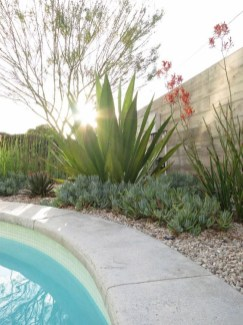 Suitable Plants Grow Beside Swimming Pool 05