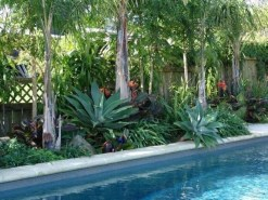 Suitable Plants Grow Beside Swimming Pool 21