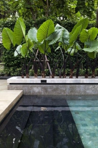 Suitable Plants Grow Beside Swimming Pool 40