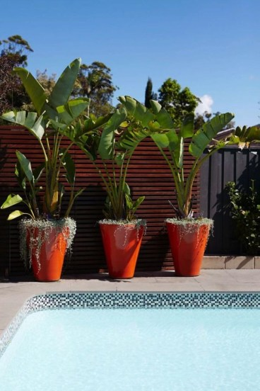 Suitable Plants Grow Beside Swimming Pool 43