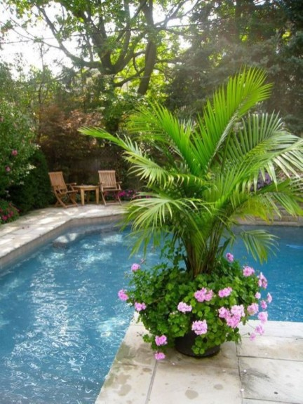 Suitable Plants Grow Beside Swimming Pool 47