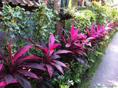 Tropical Plantation Ideas You Can Try In Your Garden08