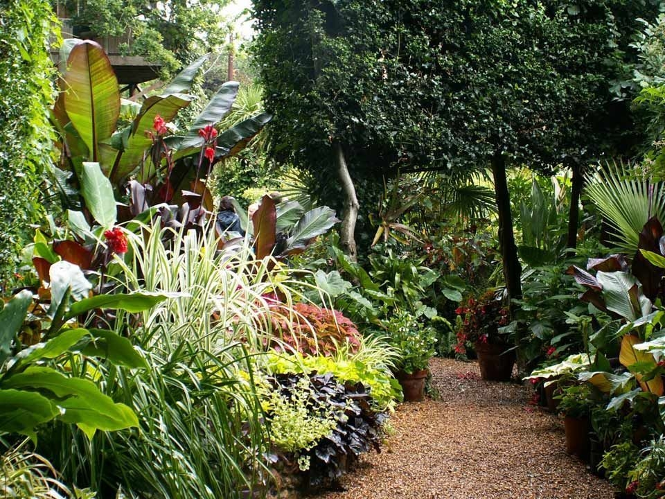 Tropical Plantation Ideas You Can Try In Your Garden22
