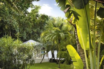 Tropical Plantation Ideas You Can Try In Your Garden31