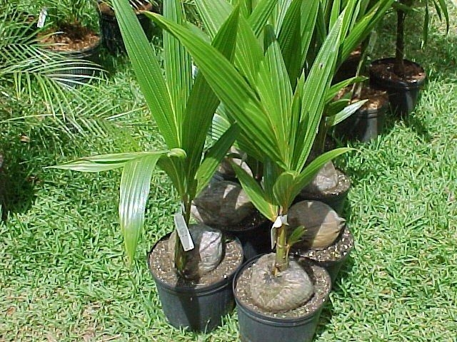 Tropical Plantation Ideas You Can Try In Your Garden39