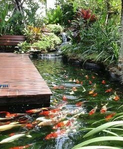 Amazing Indoor Fish Pond To Upgrade Your House 14