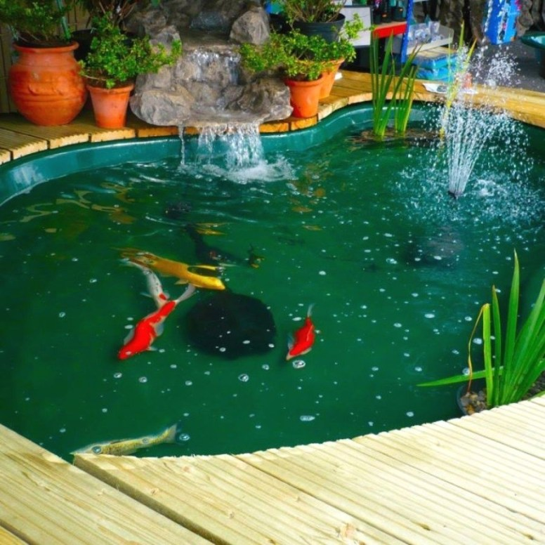 Amazing Indoor Fish Pond To Upgrade Your House 51