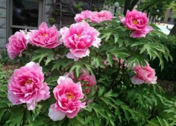 Tips For Growing Spring Flower You Can Try 05