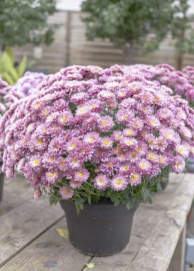 Tips For Growing Spring Flower You Can Try 20