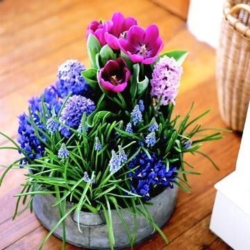 Tips For Growing Spring Flower You Can Try 26