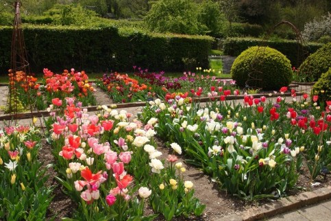 Tips For Growing Spring Flower You Can Try 32