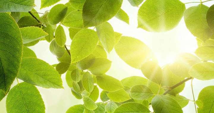 Grønne blader bed grønt renhold