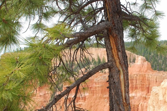 Another sign of a lightning strike on a rim tree